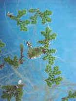 Pteridófita flotante