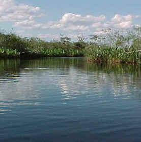 Embalsado (Pcia. de Corrientes- Argentina)