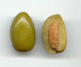 Endocarpo pétreo en aceituna