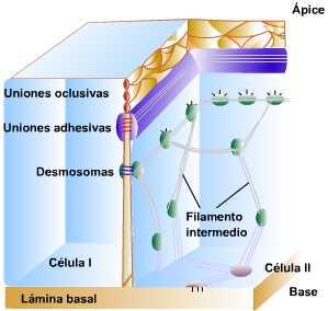 Reino celula procariota dibujo